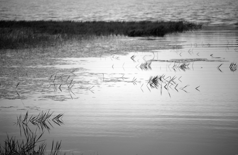 grass-and-water-bw